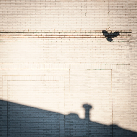 Shadow of Flight